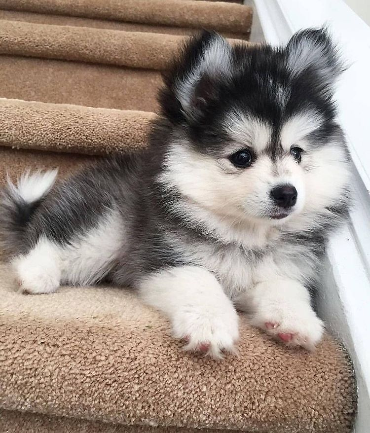 Pin By Payton Ely On Animal Baby Animals Pictures Fluffy