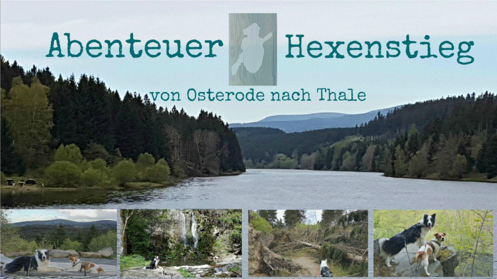 Harzer Hexenstieg Mit Hunden Travel Dogs De Hunde
