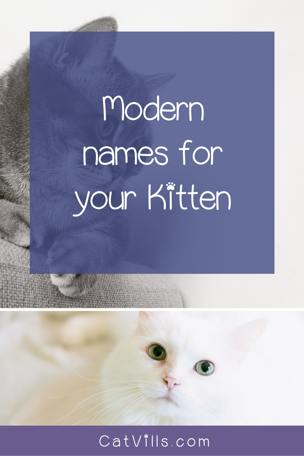 19 Totally Perfect Male Cat Names You Ll Love Catvills In 2020 Cat Names Kitten Names Funny Cat Memes