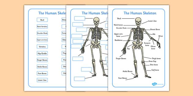 Pin by shannon mongeon on human body pinterest human skeleton human skeleton labelling sheets common names ccuart Image collections