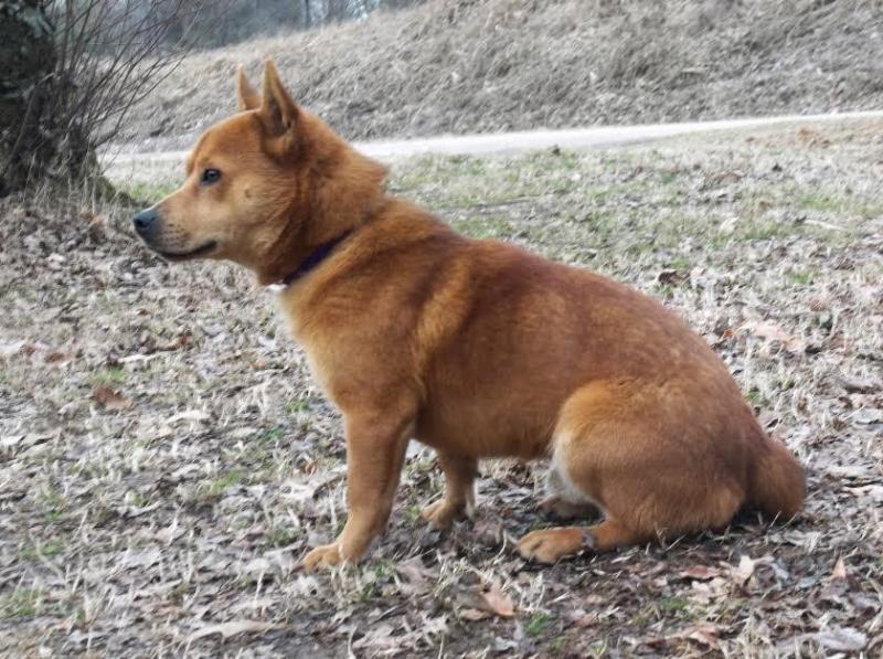 Corgi Mix Puppies For Sale In Tn