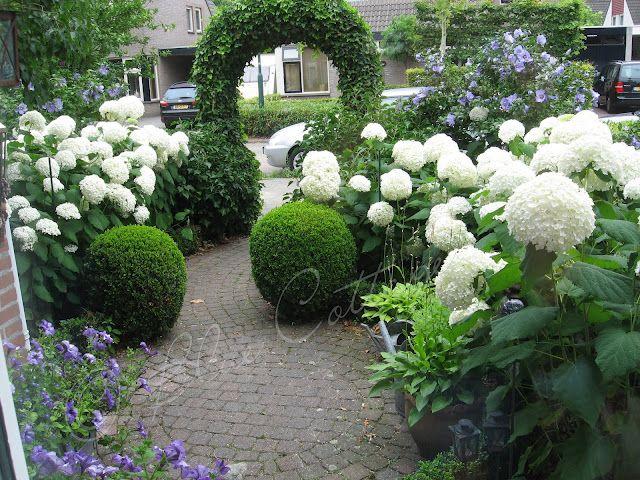 belle id e l 39 association hydrangea annabelle et buis jardin pinterest jardins massif et. Black Bedroom Furniture Sets. Home Design Ideas