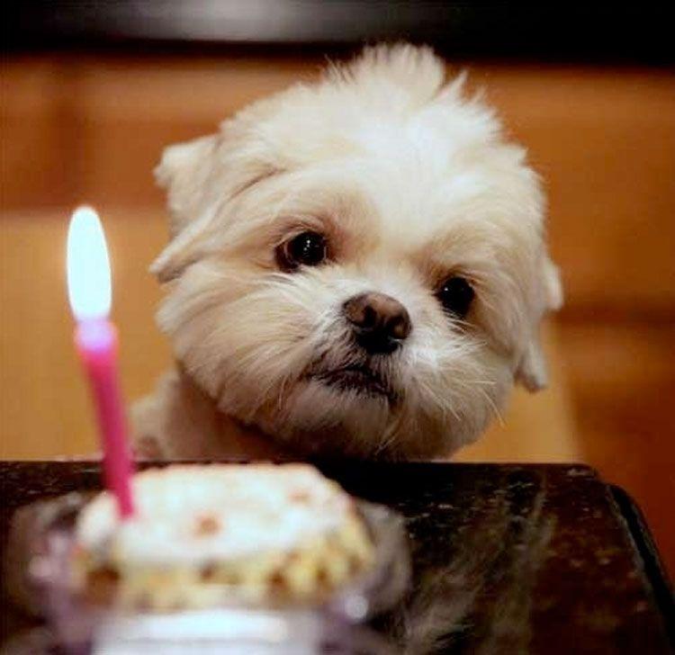 Bildergebnis für birthday sayings bilder