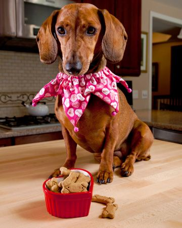 Time For Din Din Healthy Dog Treats Dachshund Dogs