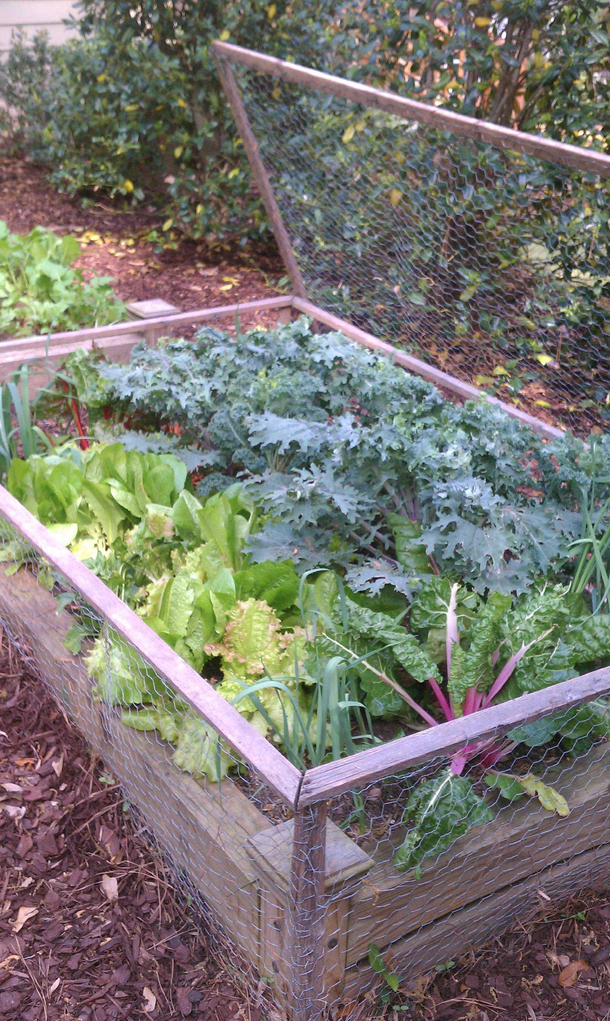 Veggie garden inspiration  a follower requested i pin my salad box from my own garden at willow