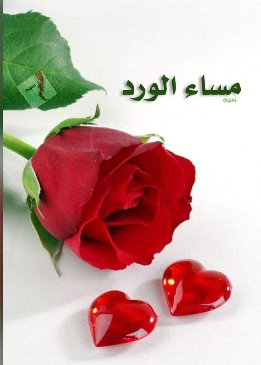 ولا أجمل من وردة تهدى ذات مساء تحمل معها عطرا خفيا يداعب القلب بأعذب الكلمات مساء ج Rosas Vermelhas Rosas Belos Jardins
