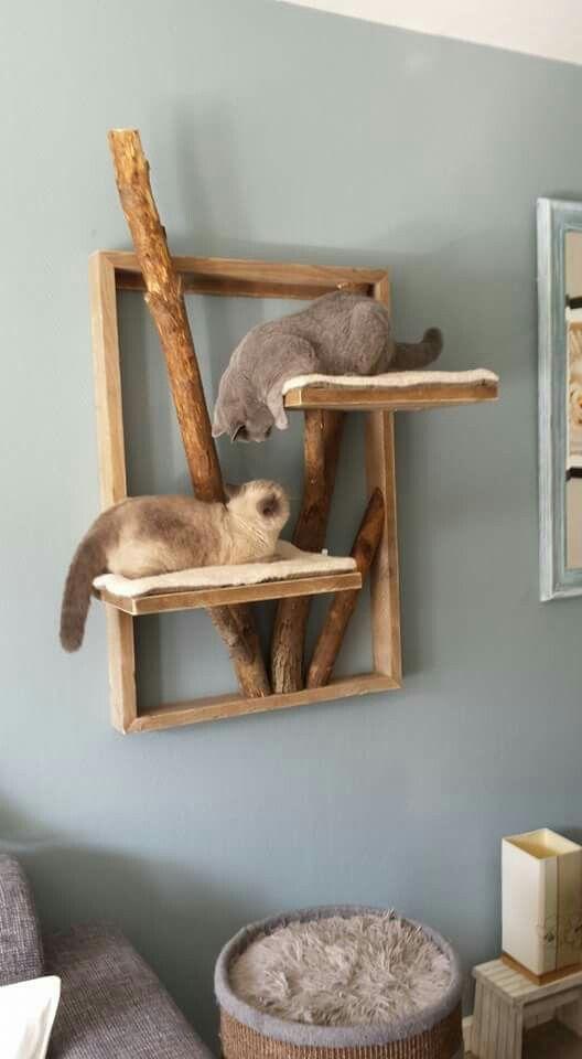 Cat DIY #diy #cat #notitle cat love #cat #DIY #cats - #notitle