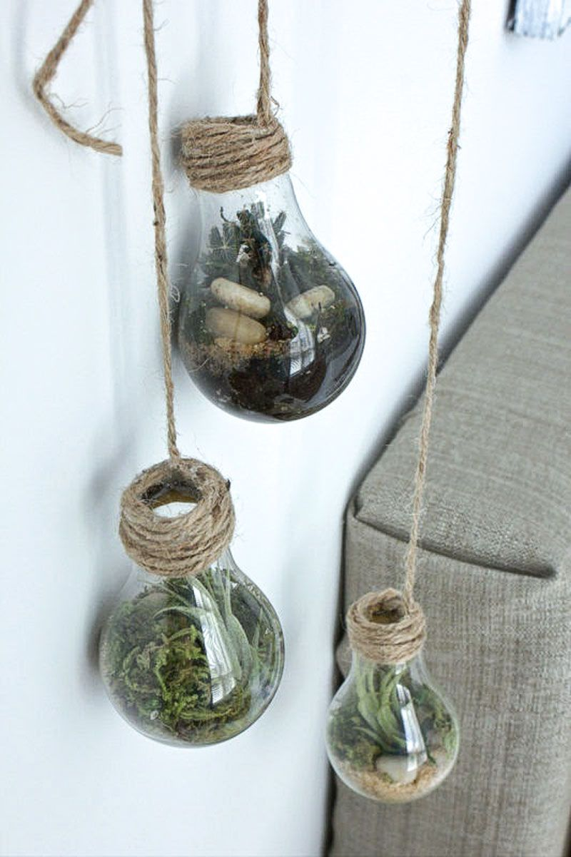 Diy Lightbulb Terrarium House Plants Light Bulb Terrarium Light