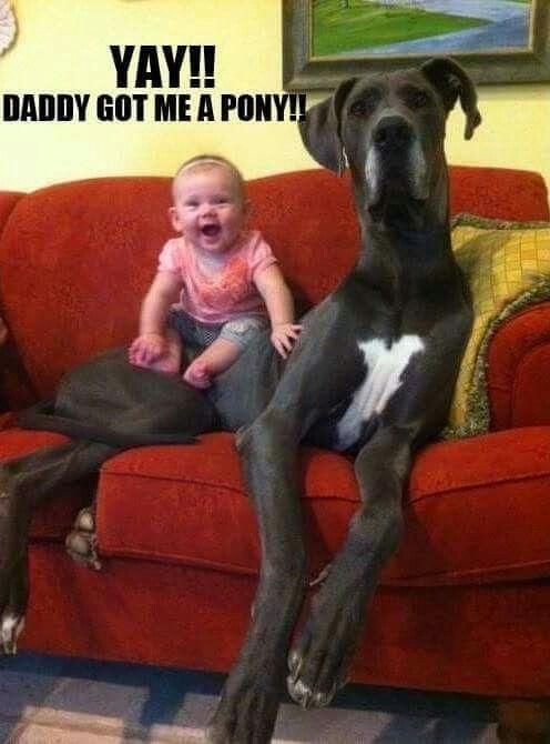 Yay! Daddy got me a pony!!
