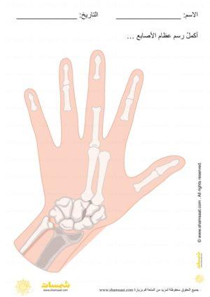 الهيكل العظمي اكمل رسم عظام الاصابع علوم للاطفال Safety Rules For Kids Rules For Kids Safety Rules