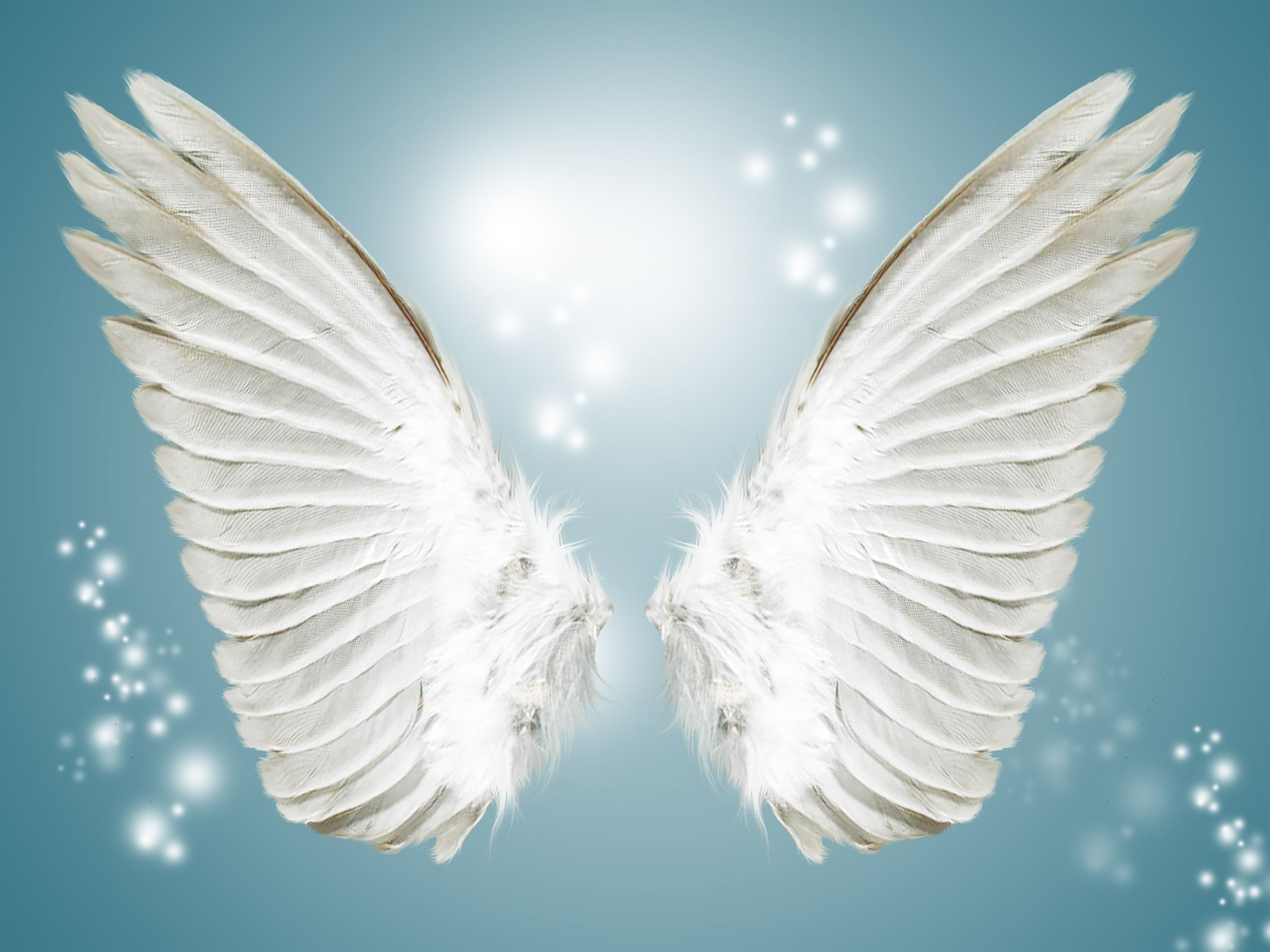 Angel White Wing Background In 2020 Angel Wings Background Angel Wings Pictures Angel Wings Photography