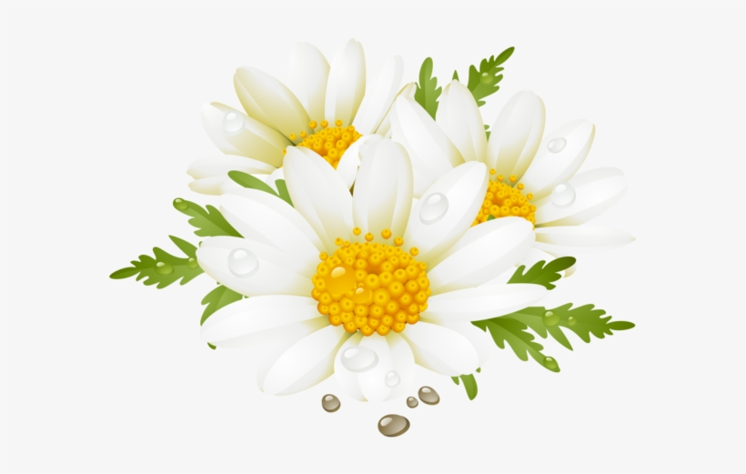 Download Daisy Clipart Flores Summer Flower Clip Art Png Image For Free Search More High Quality Free Transpa Flower Clipart Yellow Daisy Flower Flower Clip