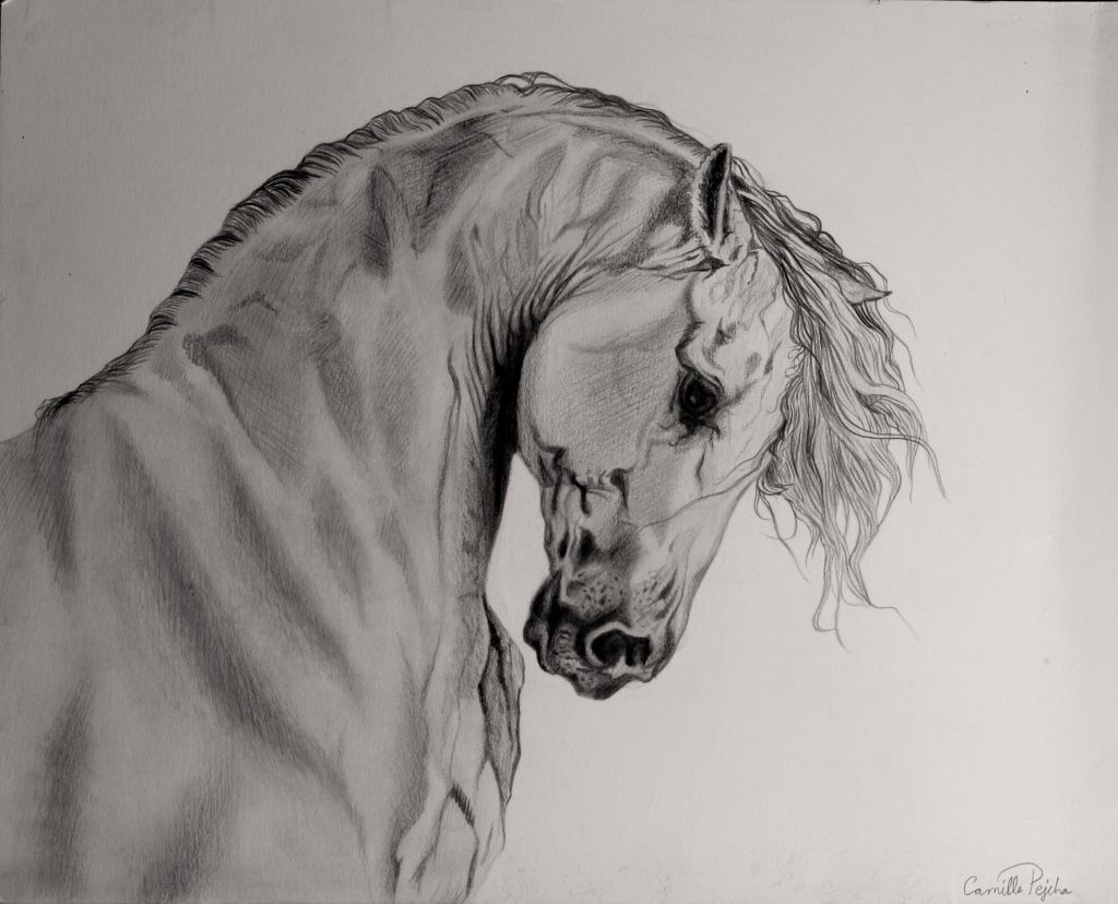 Horse Sketch..amazing