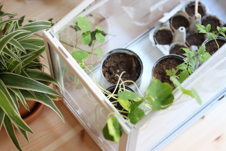 que faire en f vrier au potager jardinage potager. Black Bedroom Furniture Sets. Home Design Ideas