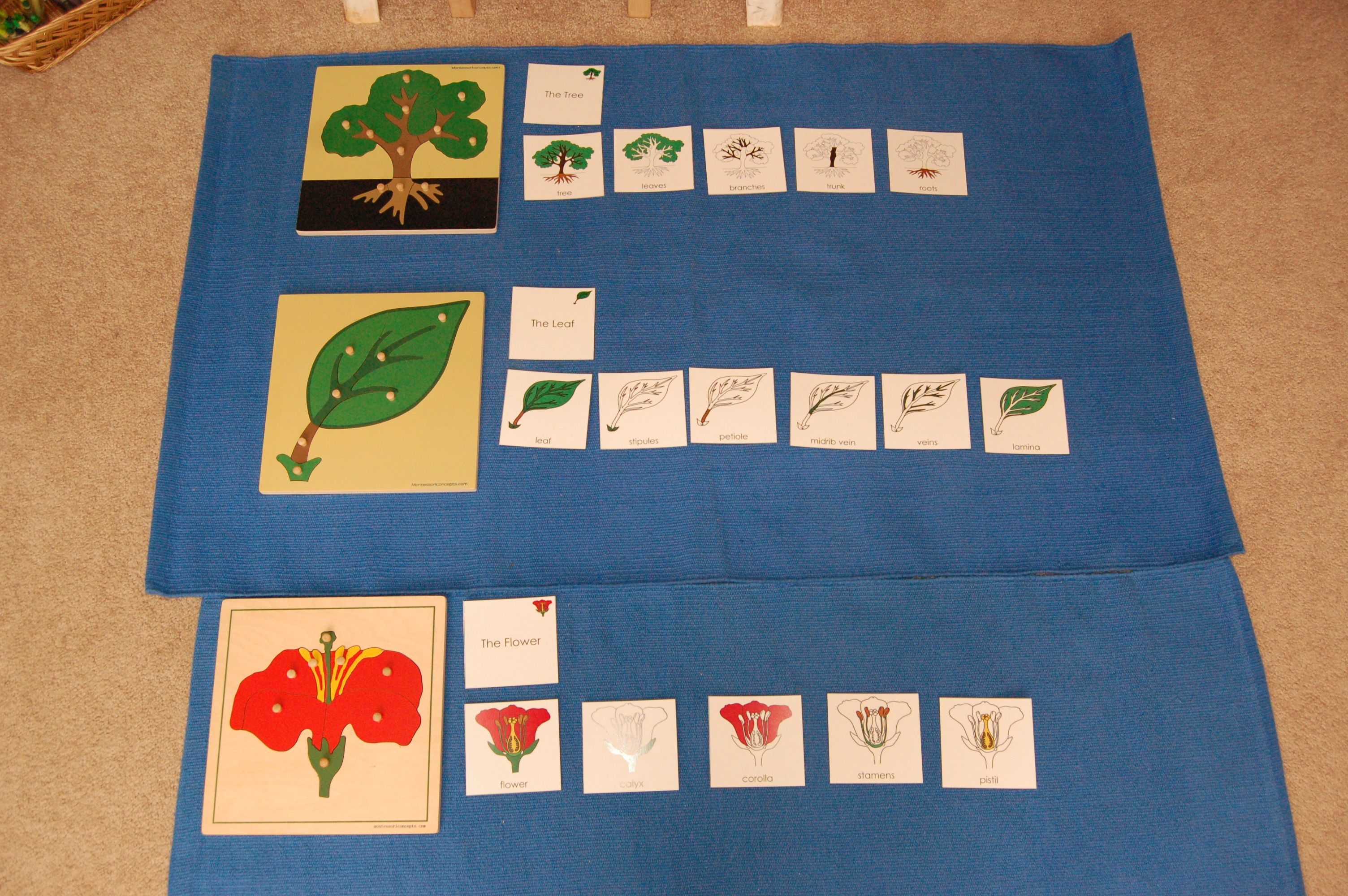 Homeschool Botany Worksheet