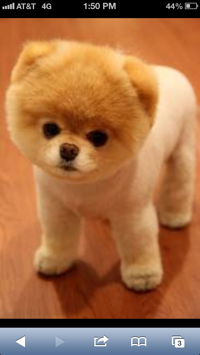 Top Boo Chubby Adorable Dog - d86888287deb5f003ef2b4696984ee96  Graphic_903492  .jpg