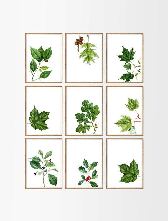 Botanical Leaves Art Print SET of 9. UNFRAMED A4. botanical prints, botanical art, botanical wall art, botanical decor, antique botanical