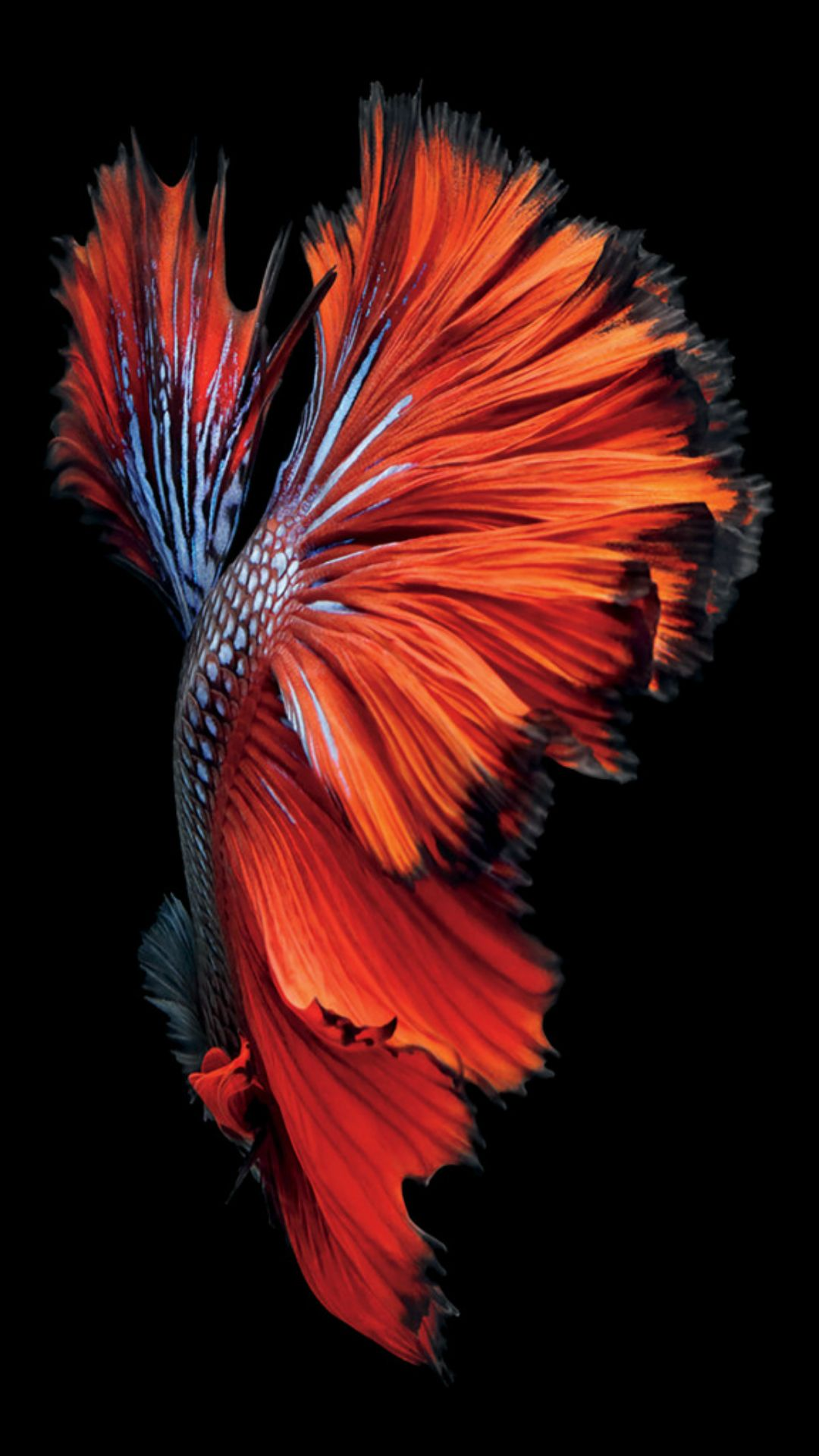 IOS9 Red Fish Artwork Pattern Dark IPhone 7 Wallpaper
