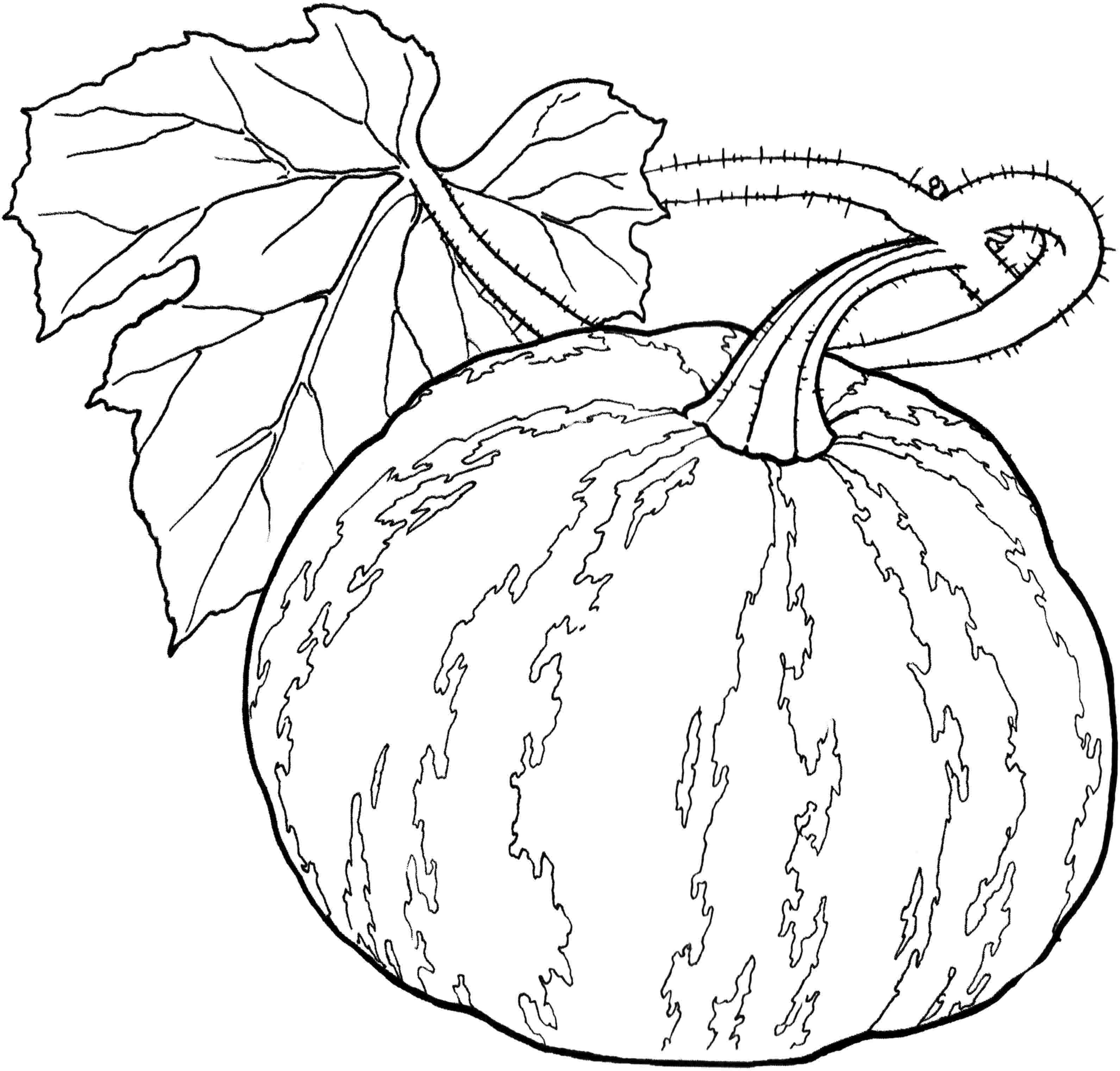 Légumes Coloriage 3 Fruit Vegetables Pinterest Kid