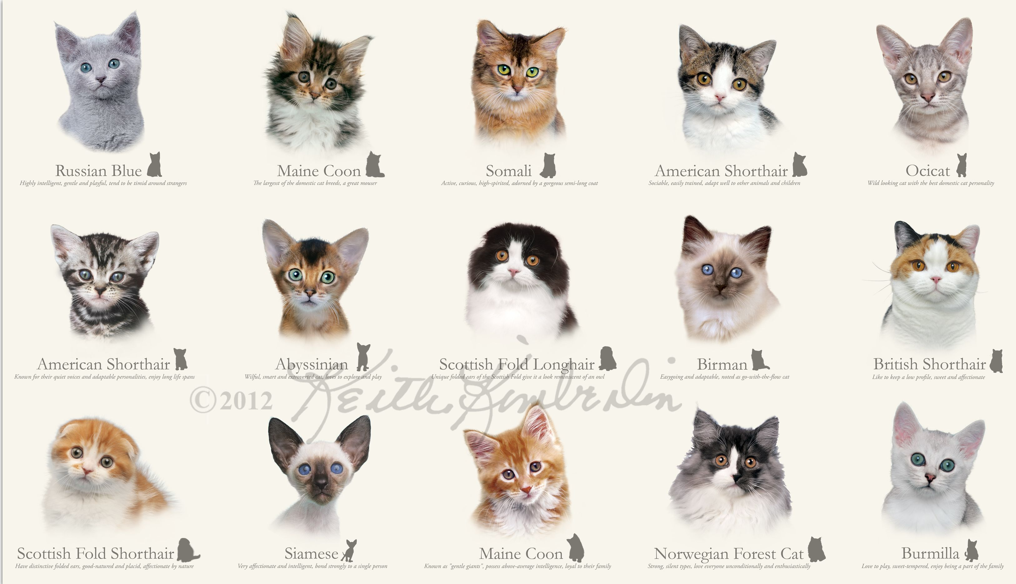 Cat Species | cats there aren t nearly as many cat breeds ...