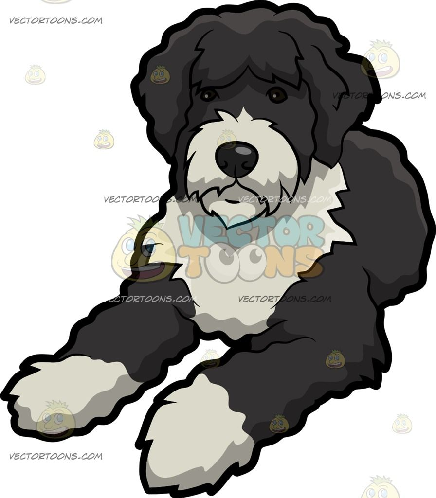 A Resting Portuguese Water Dog Black And White Cartoon