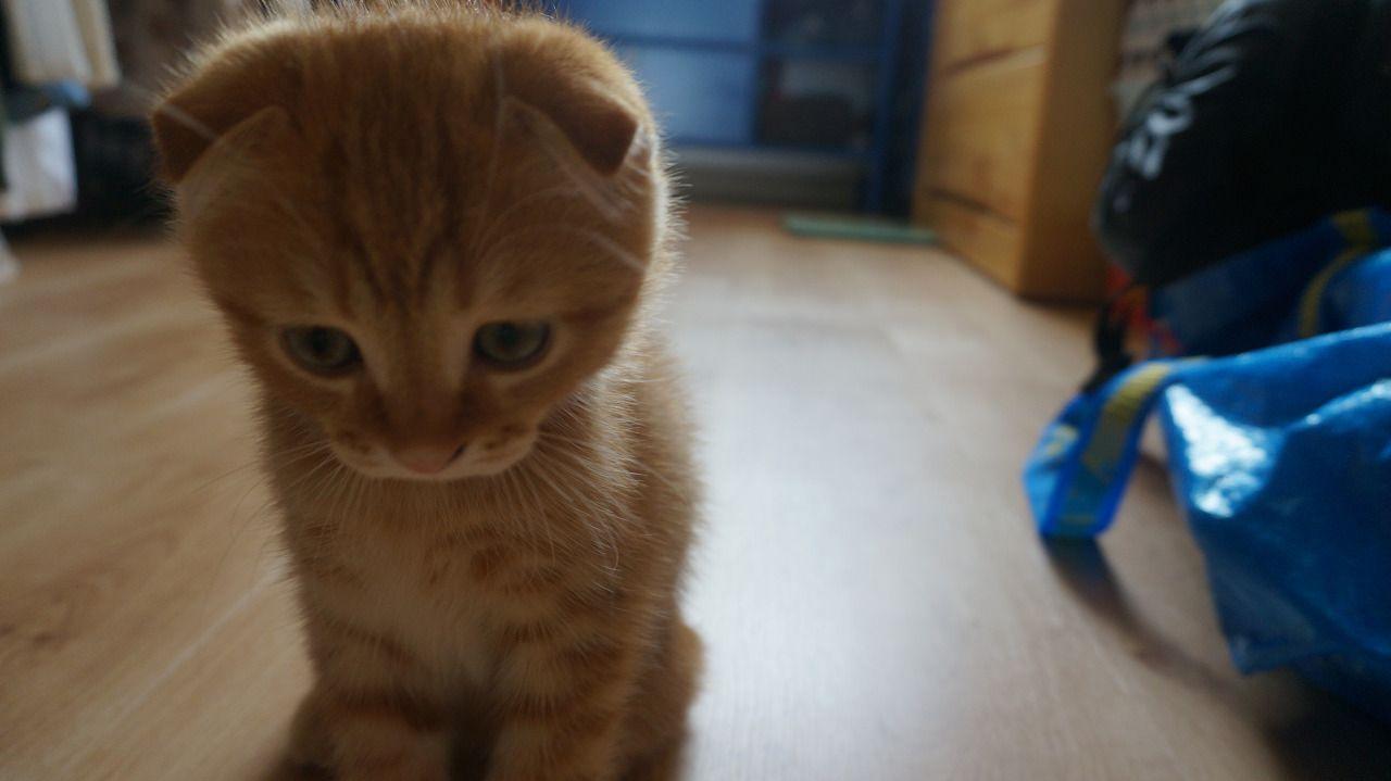 내가 왜 둘째 고양이를 데려와서
