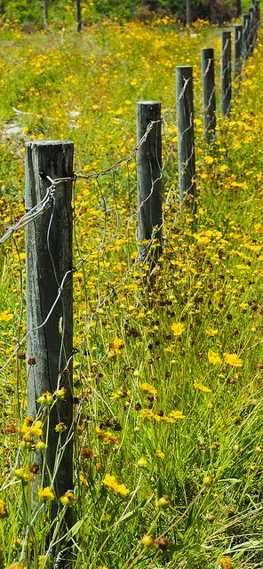 Country Living ~ The farm fence line!                                                                                                                                                                                 More