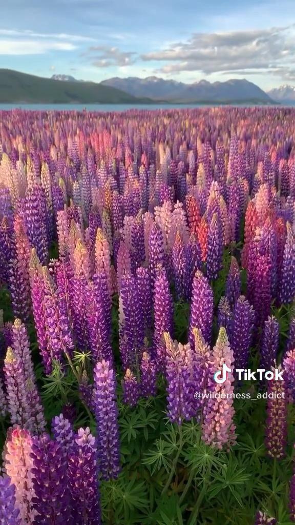 #travel #newzealand #beautifuldestinations #nature #plants