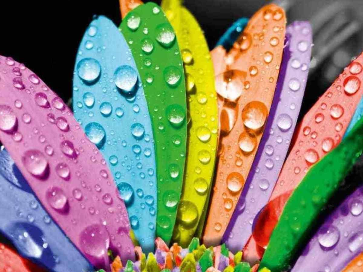 تناسق الالوان ما هو وماهى فائدته In 2020 Color Meanings Happy Holi Flower Wallpaper