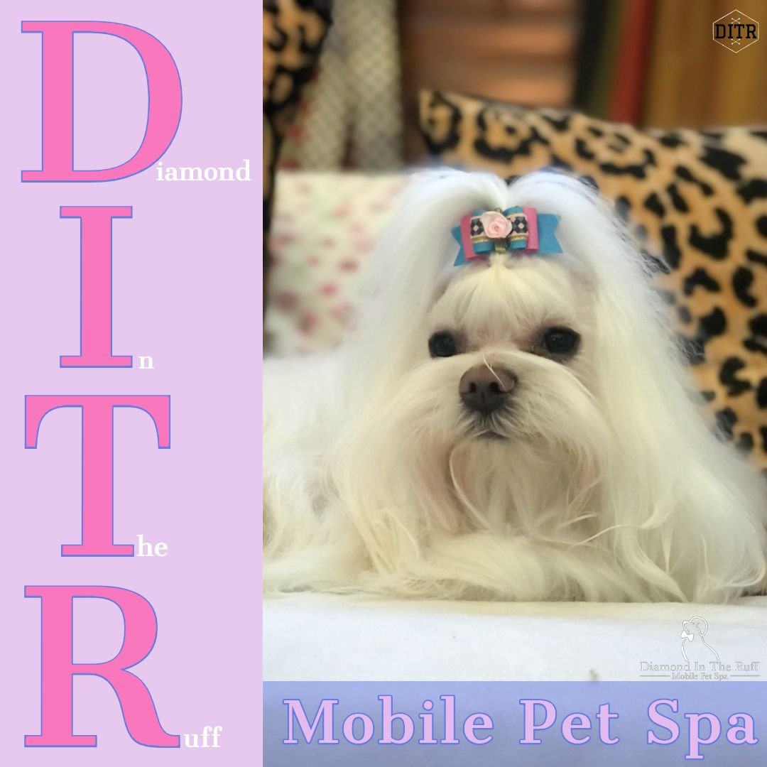 Diamond In The Ruff Mobile Pet Spa The Best In Mobile Dog Grooming Edmond Oklahoma Maltese Puppy Dog Grooming