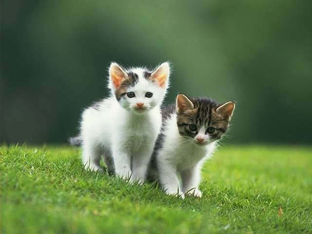 قطط صغيرة Google Search Kittens Cutest Cats Cat Love