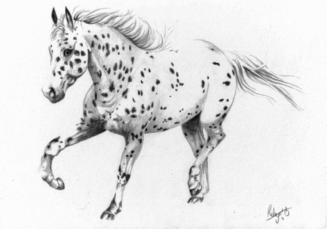 Appaloosa Horse Drawings Appaloosa Horse Tattoo [ 749 x 1067 Pixel ]