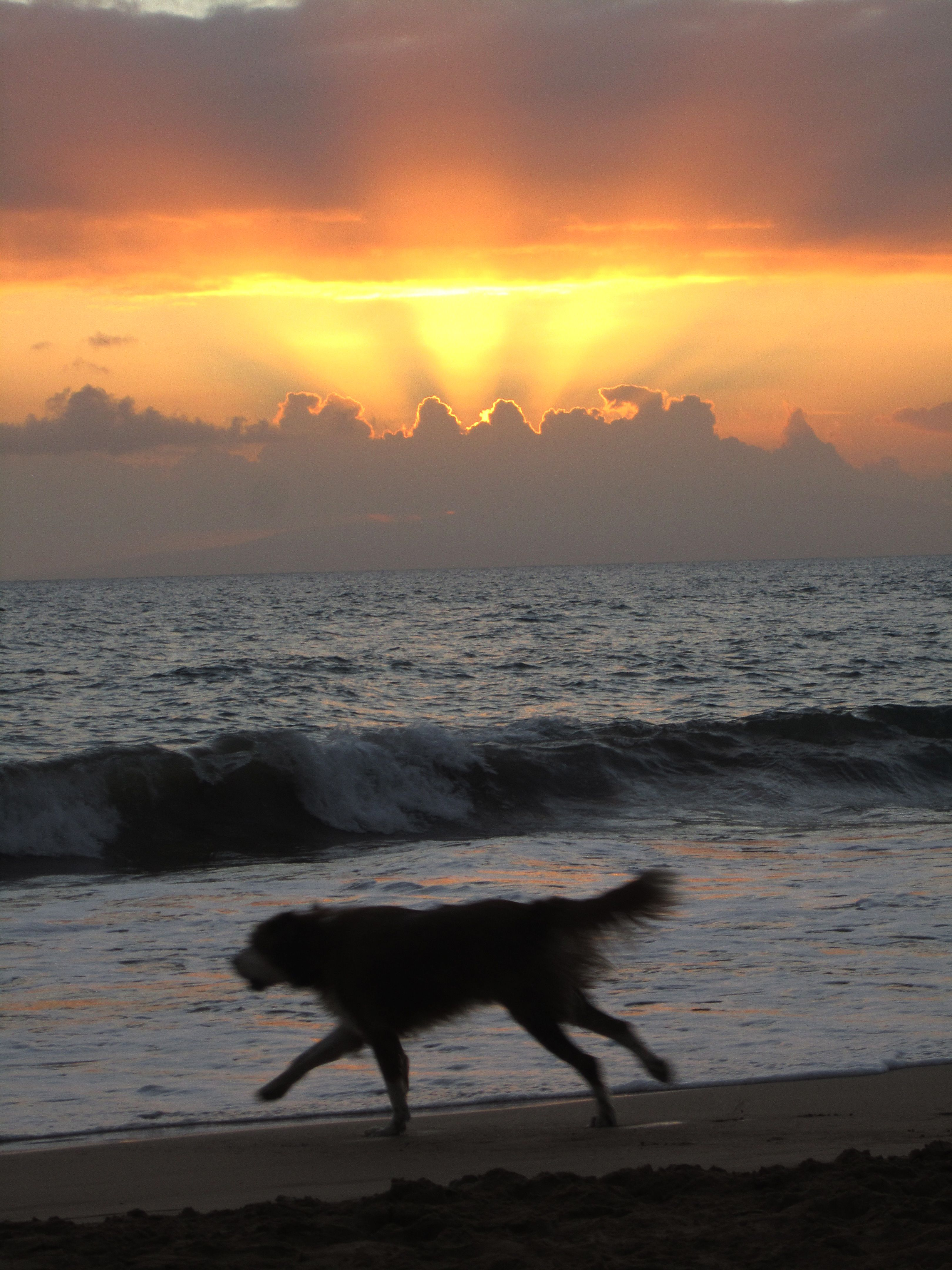Dog on beach in Maui.  FREEDOM and JOY and BEAUTY!