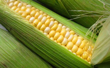 Un ingrediente, muchas recetas: el maíz
