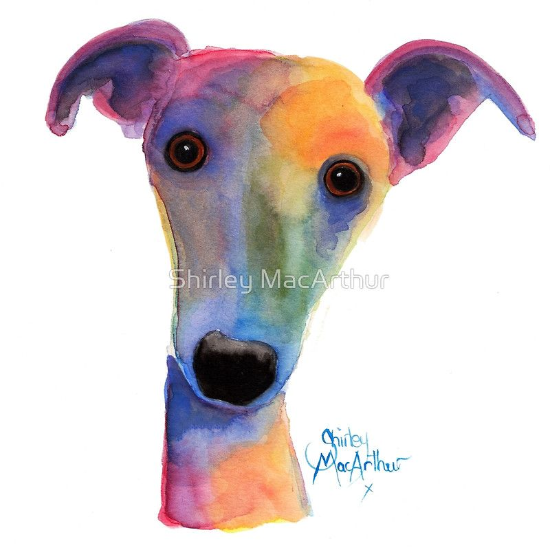 Whippet Greyhound Print Pansy By Shirley Macarthur Canvas