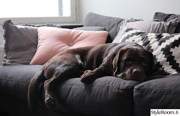 olohuone,koira,sisustus,hay,sohva