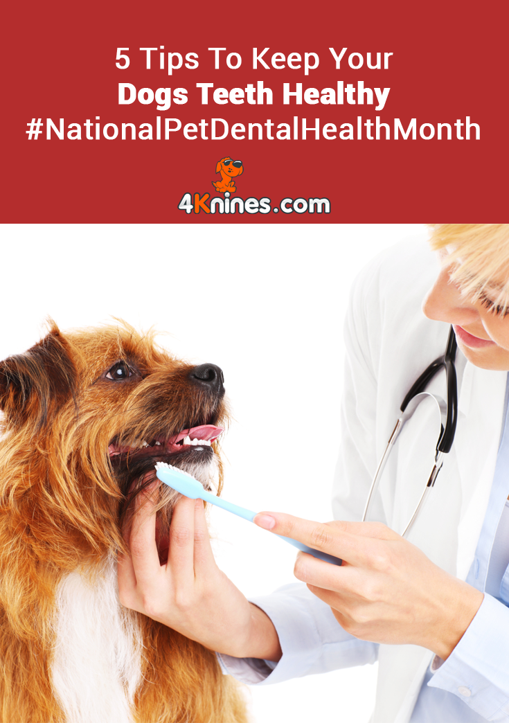 Don't To Brush Your Teeth! Pet dental month