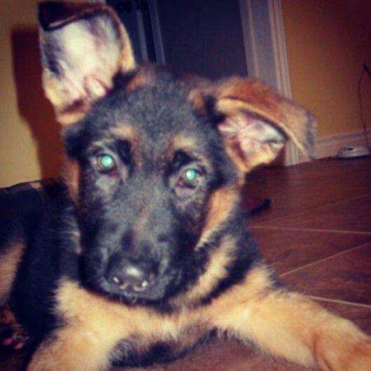Thor. So cute