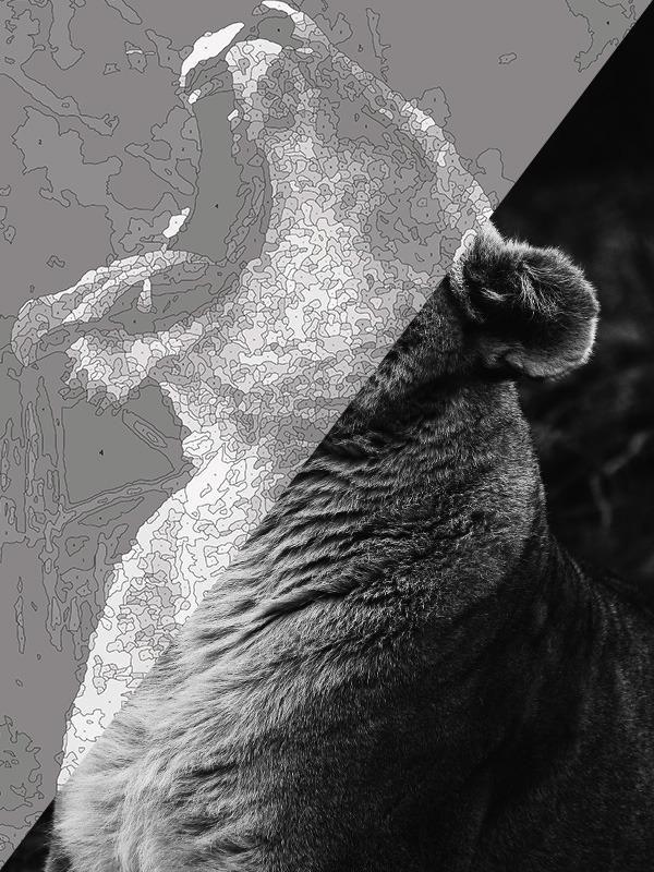 Photo of Majestic Roar