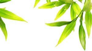 Image Result For خلفيات ورق شجر Herbs Photo Image