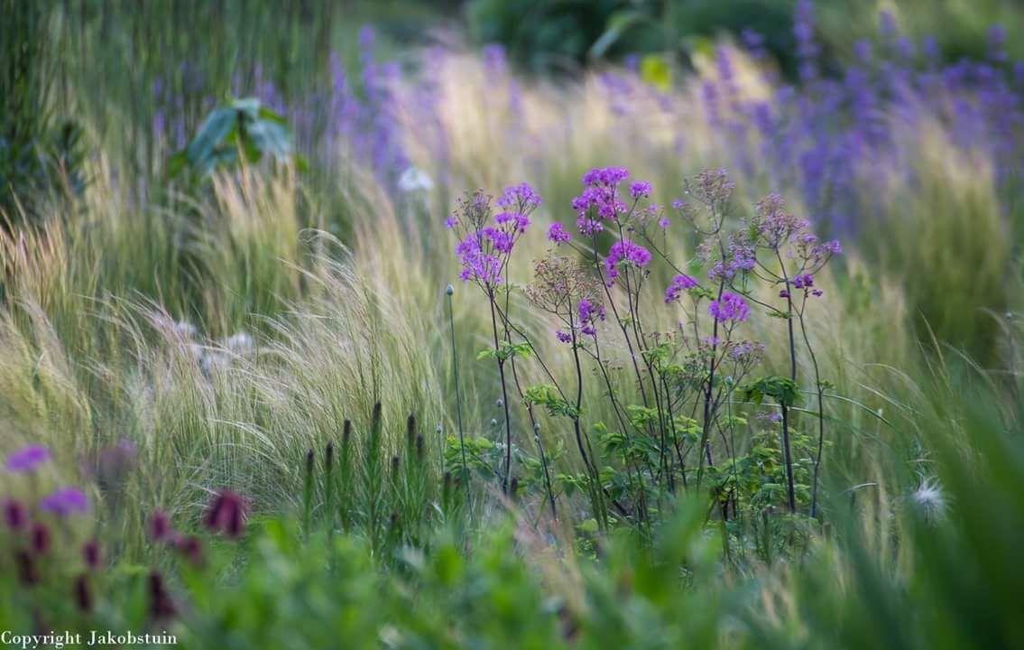 Jaap de vries jakobstuin twitter gr ser grasses for Pflanzengestaltung garten