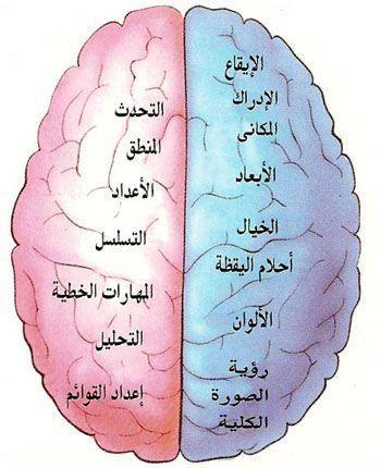 وظائف فصي الدماغ الايمن والايسر Brain Parts Pill Books