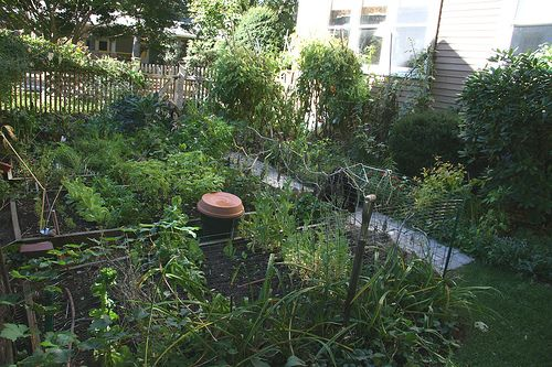 Attrayant Shady Vegetable Garden