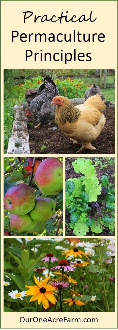 Permaculture Design Examples Google Search: Permaculture Principles For Practical Gardeners And