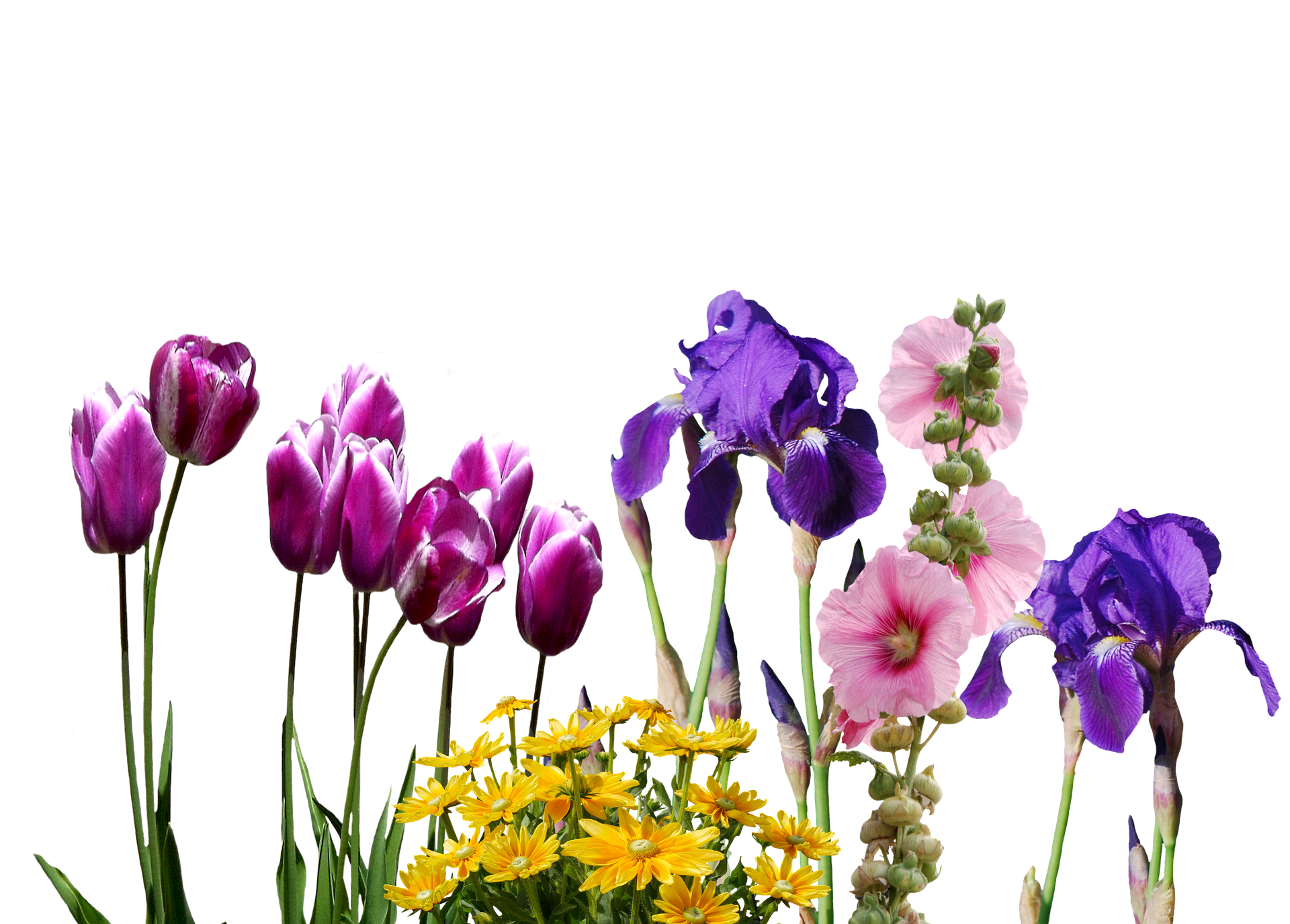 This Flower Is Beautiful But Highly Injurious For Health 19201080 Via Classy Bro Flower Images Spring Wedding Flowers Tulips