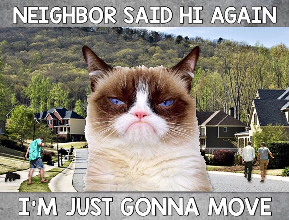 Neighbor Said Hi. It's Time To Move 😾🙀😹 Grumpy cat, Cat