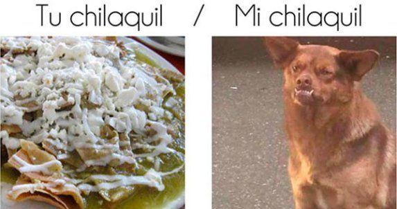 d86f794b810643c52d48d7e24a388aa4 the 25 best memes del chilaquil ideas on pinterest memes perros