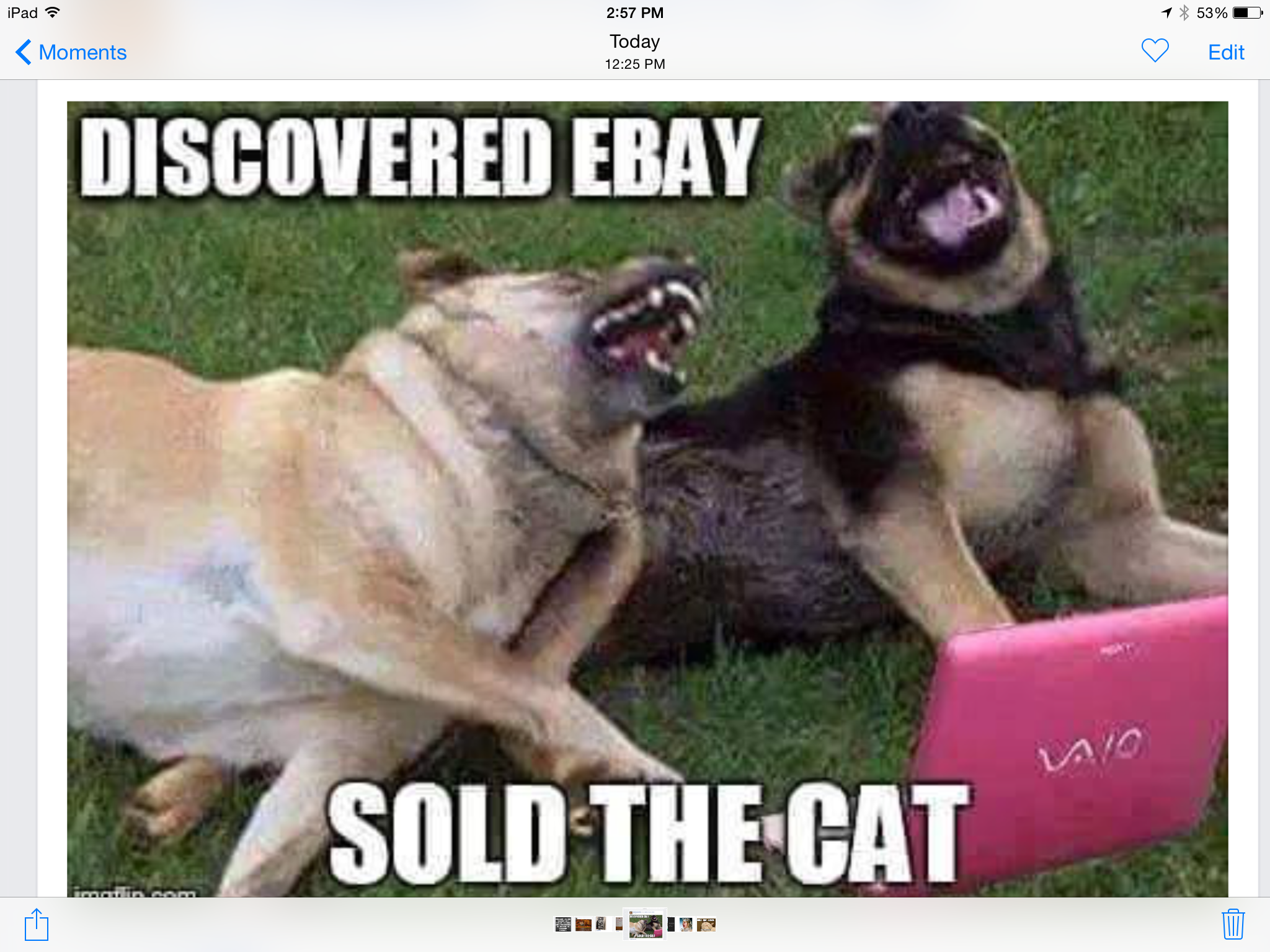 Pin By Patsy Keltch On Humor Animal Memes Funny Dogs Funny