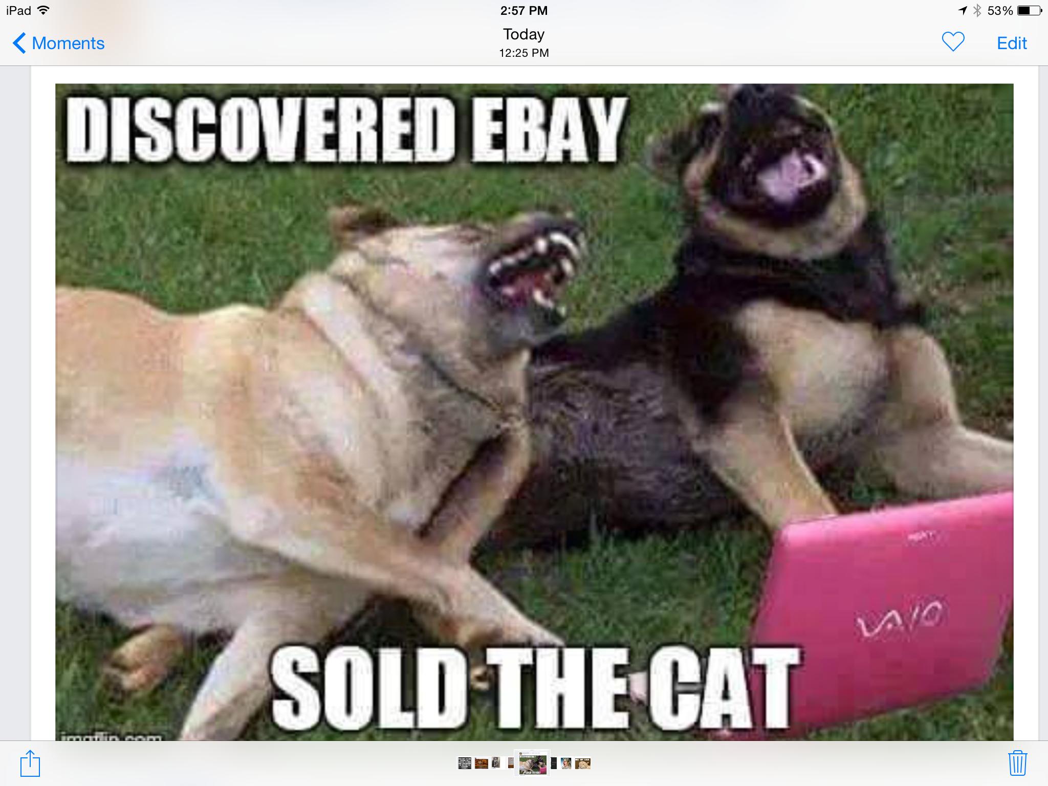 Funny Dog Joke Meme : Sold the cat job well done hahahaha pinterest
