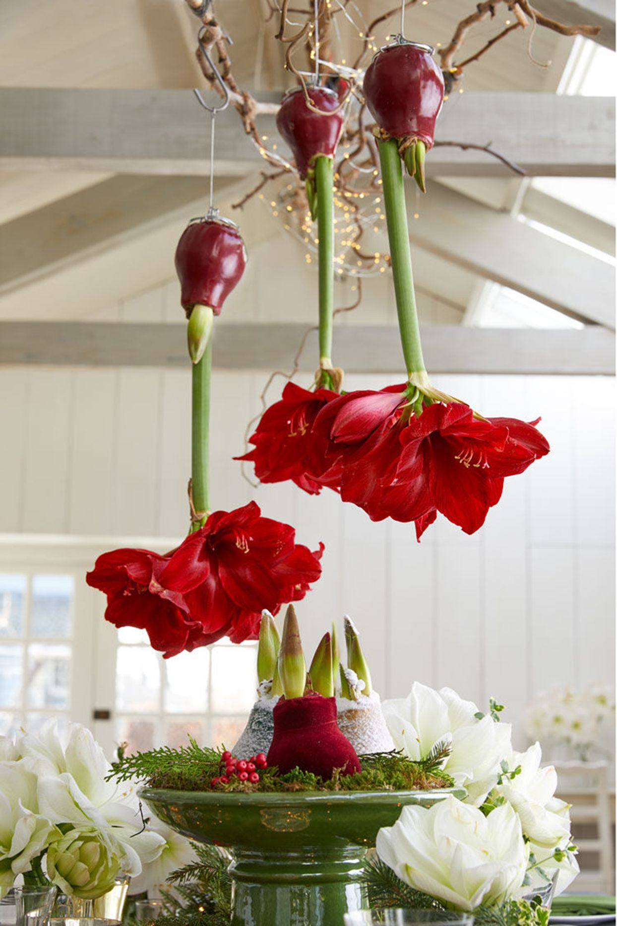 Waxed Amaryllis Bulbs Are the Easiest Flowers to Grow This